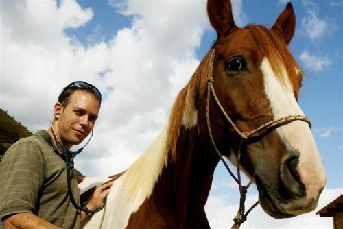 שיאון עידו - וטרינר סוסים