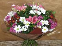 פרחי קוליברי