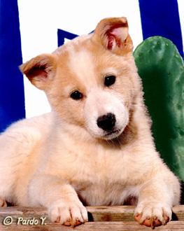 סיזר מילאן - מאלף הכלבים מנשיונל גאוגרפיק