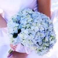 אמריליס בוטיק פרחים