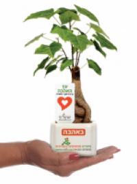 מסרים ממותגים בעציצים - ישראל רף