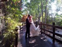 חתונה חברתית בגן החיות חיפה