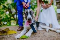 ליטופים - פנסיון וליווי כלבים בצילומים ובחתונות