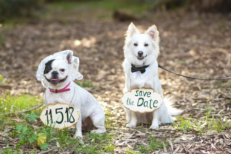 כלב בצילומי חתונה