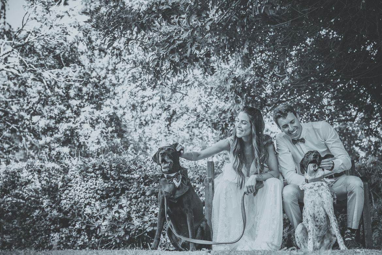 צילום חתן כלה עם כלבים