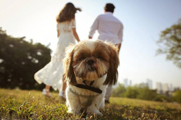 פער גילים בדרך לחתונה