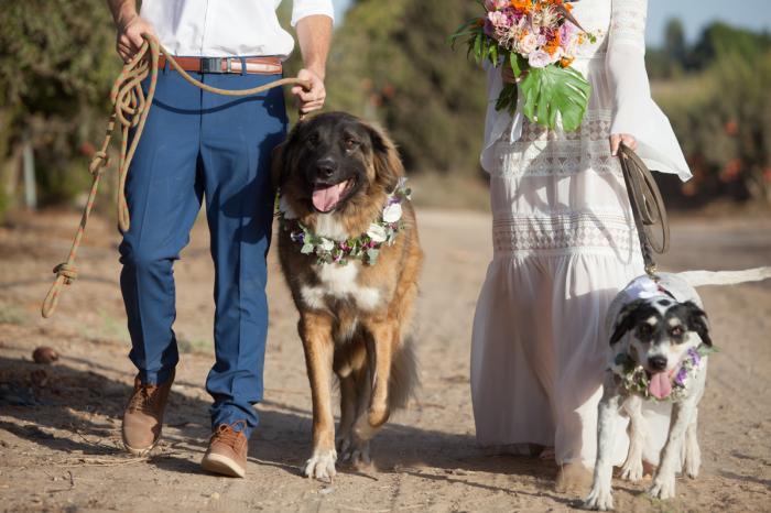 גם בעלי החיים מוזמנים להתקשט לכבוד החגיגה... על זמני - אמרנו?