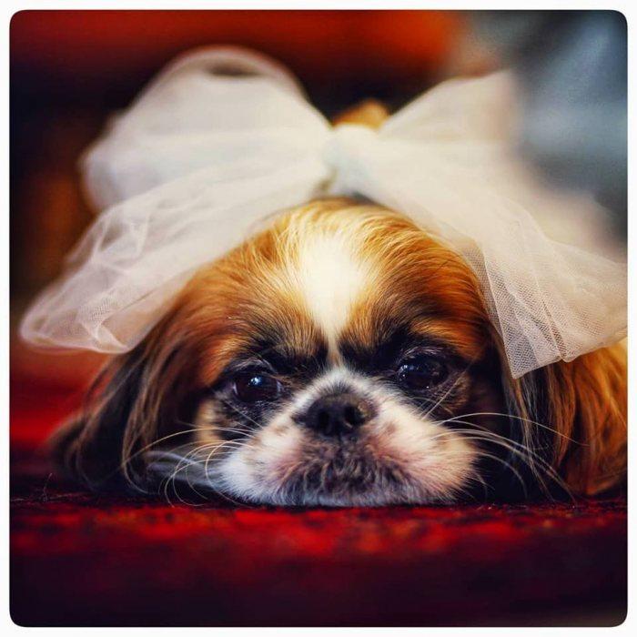 הפקה וניהול אירועים - דוגי-סיטר: כך תשלבו את הכלב שלכם בחתונה